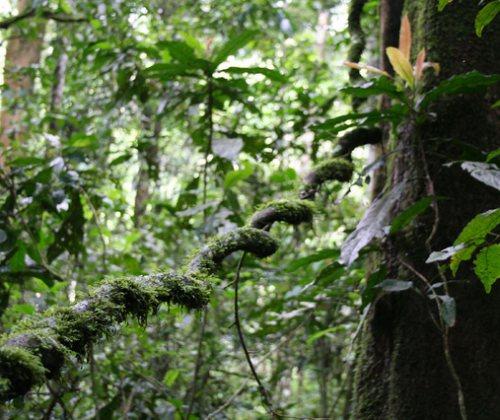 Visit Rubanga Forest